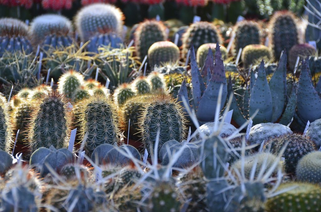 Contact Coach House Cacti to arrange a visit, discuss a talk for your club / society or ask us for advice.