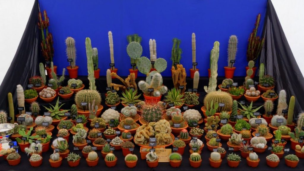 We offer talks on cacti cultivation including caring and propogation