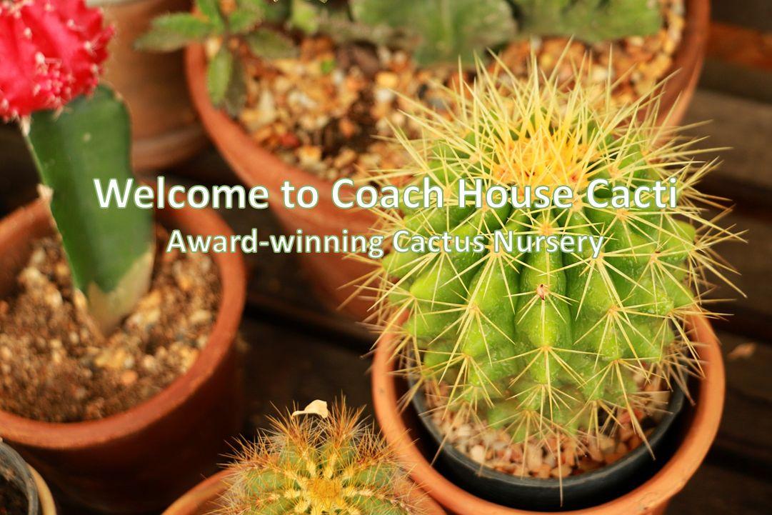 Coach House Cacti - Cactus Nursery Dorset